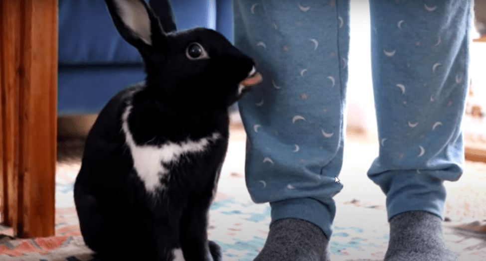 never ignore your rabbit to show him your love