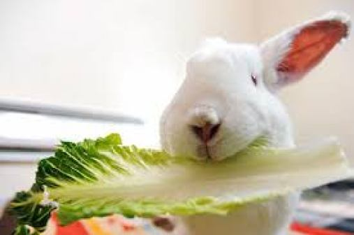 what do rabbits like to chew on ?
