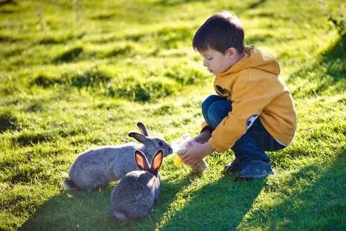 what makes rabbits good pets
