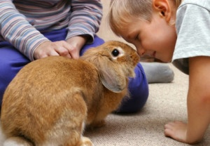 Do rabbits recognize their owners?