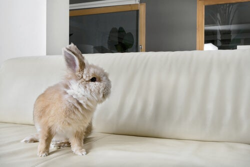why are rabbits good pets