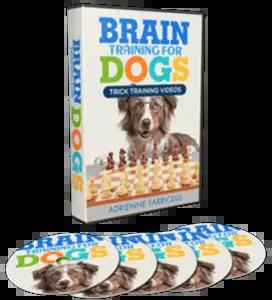 best dog training online