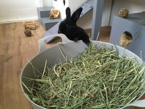 how to make bunnies eat more hay