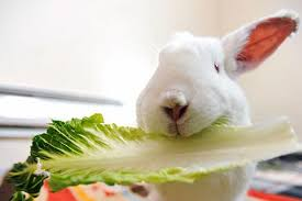 which food is safe or not for rabbits