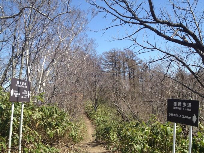 藻岩山山頂への道