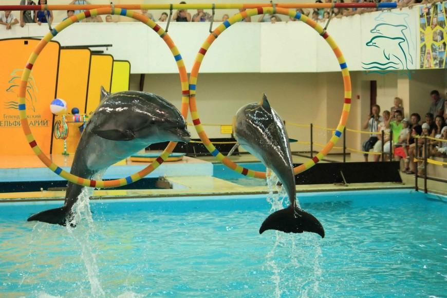 Геленджик, дельфинарий