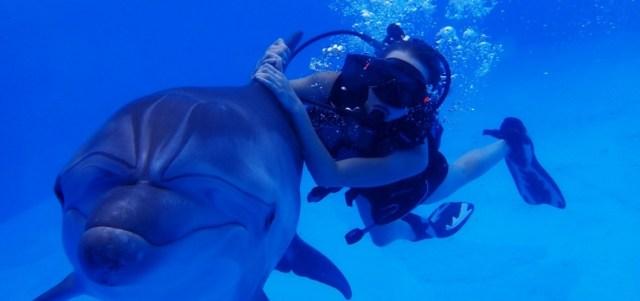 Дайвинг с дельфином