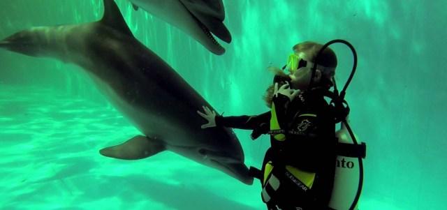 Дайвинг с дельфином в бассейне