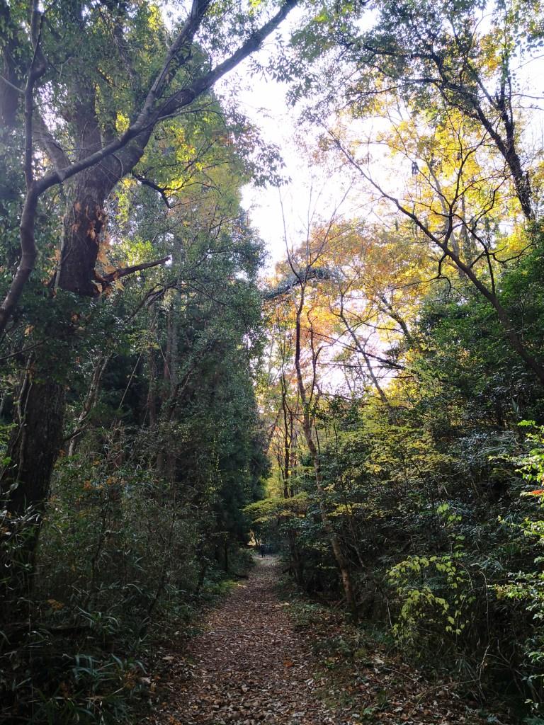 継鹿尾山登山道 善師野駅への道