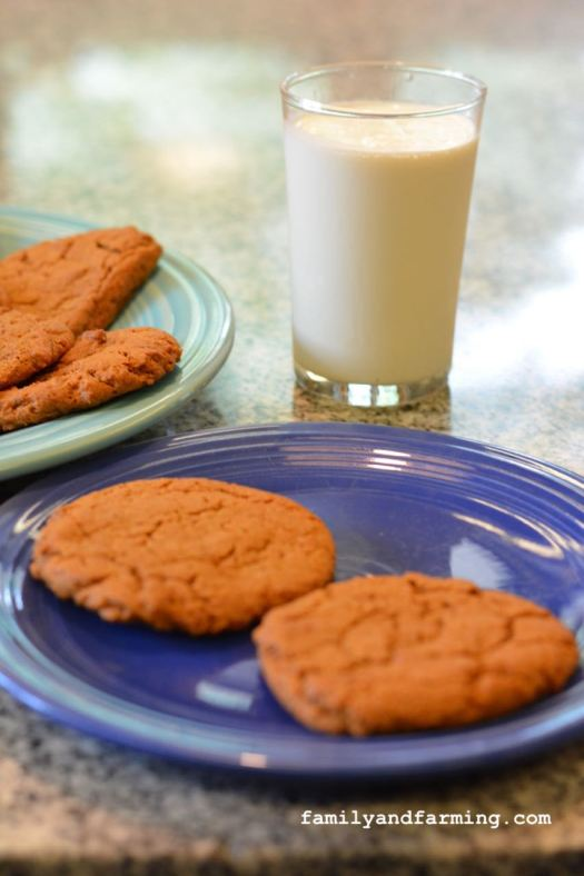 Gingersnap cookies on a plate with milk.