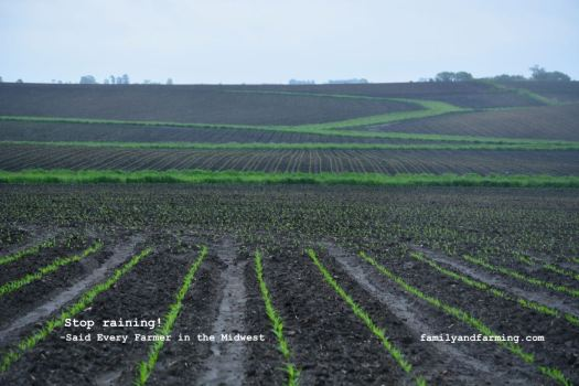 Image of wet corn field