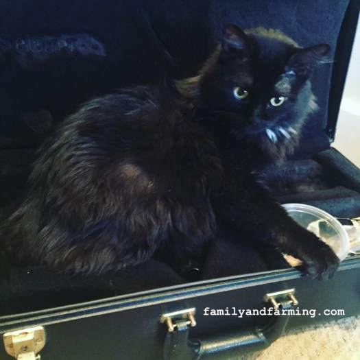 Cat in Sax Case
