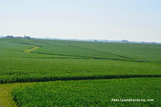 High Angle of Cornfield in Iowa