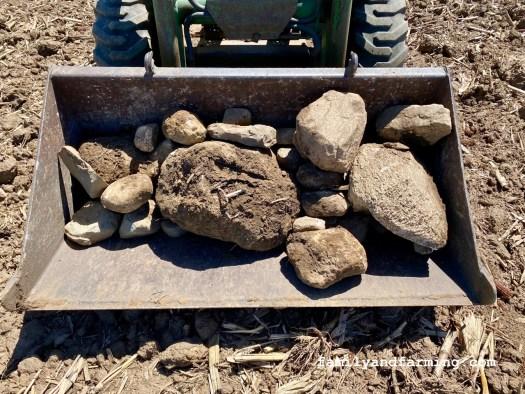 Large Field Rocks