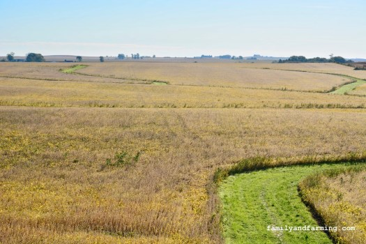 High Angle of Soybean Field