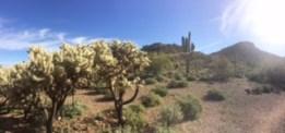 blog desert ian
