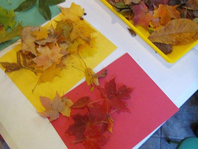 Leaf Colour Sorting