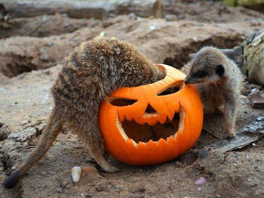 Halloween-Yorkshire-Wildlife-Park-2014-photo2