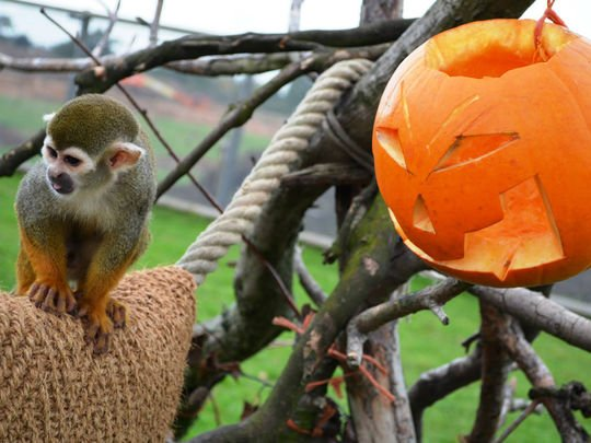 Halloween-Yorkshire-Wildlife-Park-2014-photo3