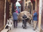 A honkey (cross between a donkey and a horse) carrying a heavy load