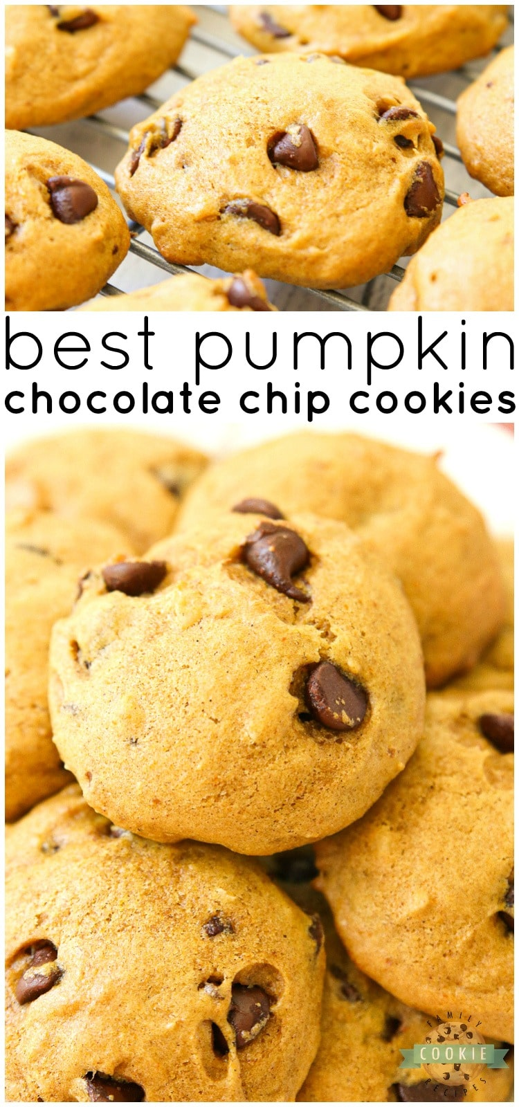 Delicious Pumpkin Chocolate Chip Cookies are incredible pillows of soft and chewy cookie goodness! Pillowy soft chocolate chip cookies straight from the oven are made even better with the addition of pumpkin. #chocolatechip #pumpkin #cookies #baking #dessert #recipe from FAMILY COOKIE RECIPES