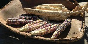 cropped-corn