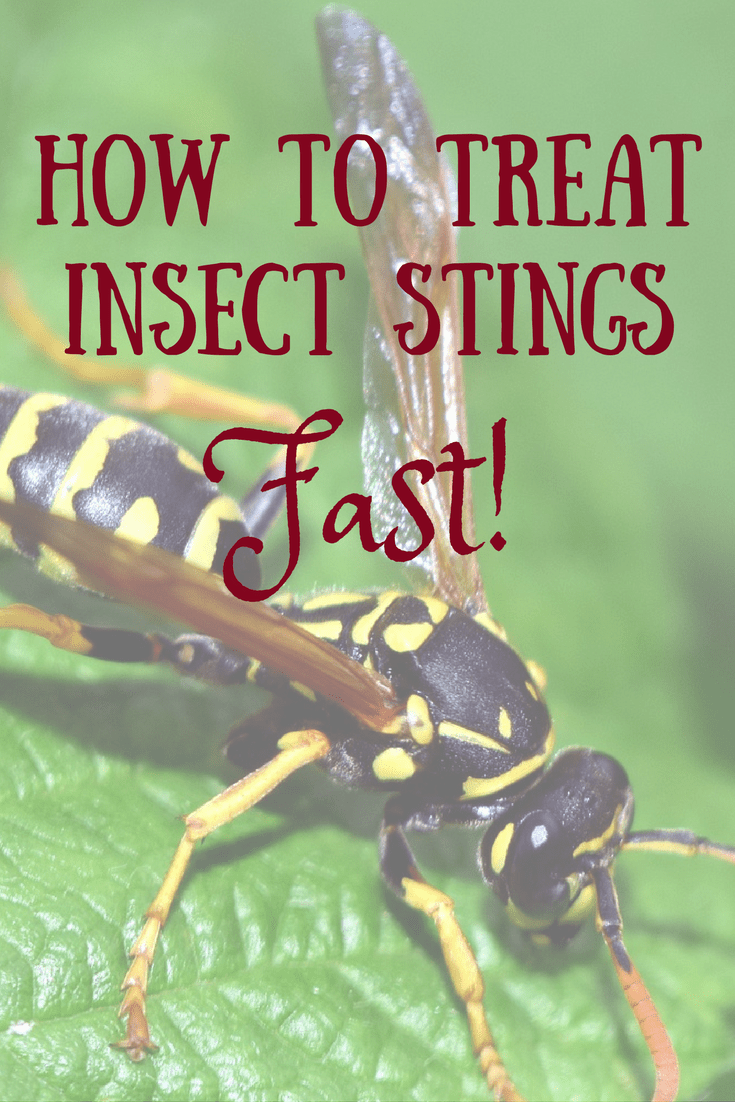 How to treat insect stings fast!