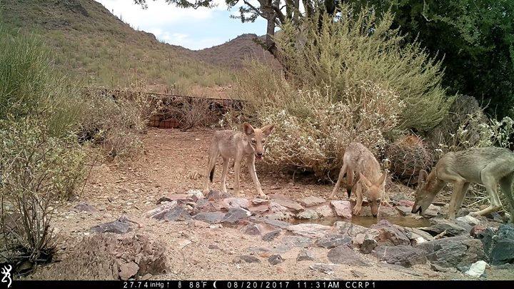 Southwest Wildlife presents!