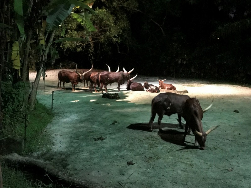 e894c5922456e 12 Tips Before You Go To Night Safari In Singapore 2019