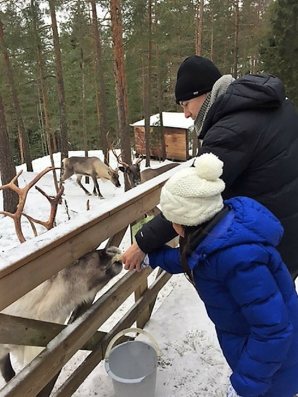 Nuuksio National Park In Winter Reindeer Feeding