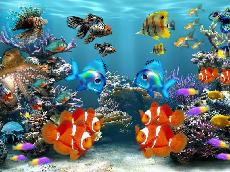 Colourful Fish Aquarium