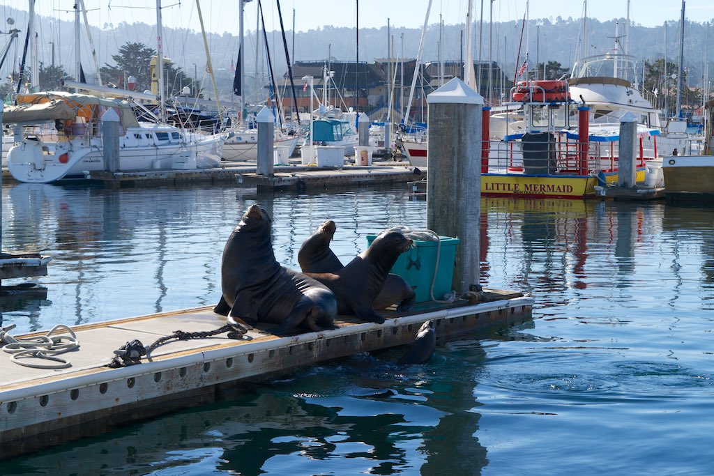 Up to now, it was Us who approached them. This time, these three Sea Lions took the initiative to climb on a dock near us. (We didn't know yet, but they were scouting the place)