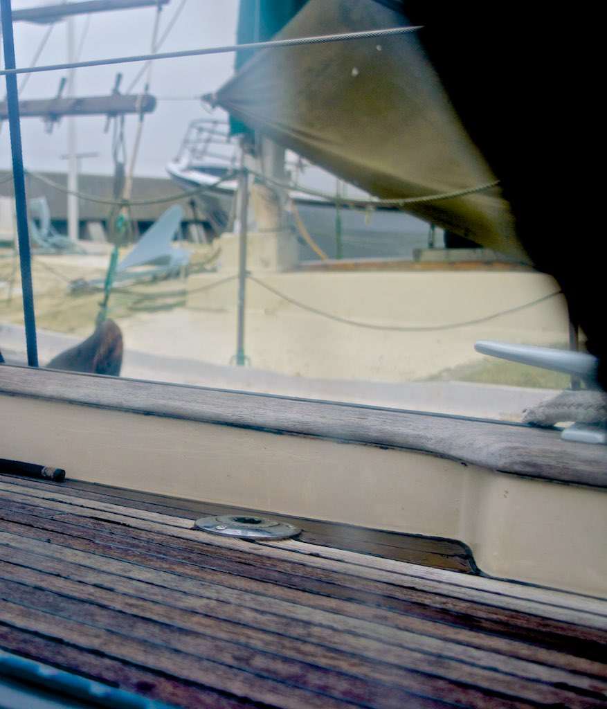 """Early morning, the """"day after"""". Before going away, the Sea Lions were still peeking through our windows. Eerie."""
