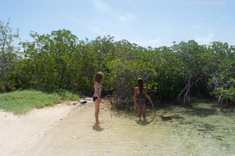 Raquel and Sierra exploring a mini mangrove at the sandy isthmus
