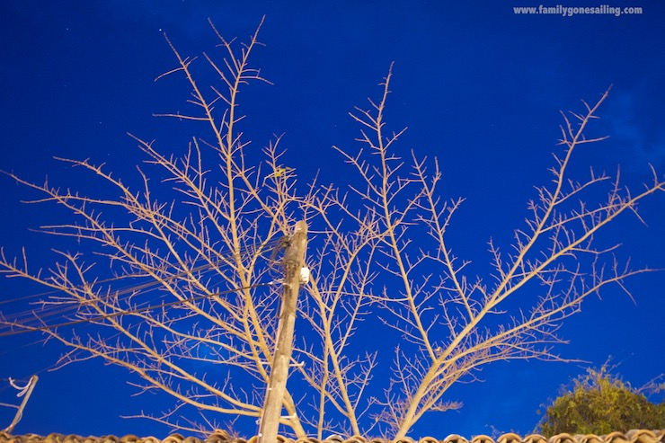 This bare tree seemed to be posing against the clear-blue evening sky, and I obliged.