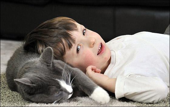 طفيليات القطط