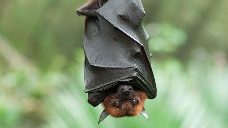bats-3.jpg?fit=740,416