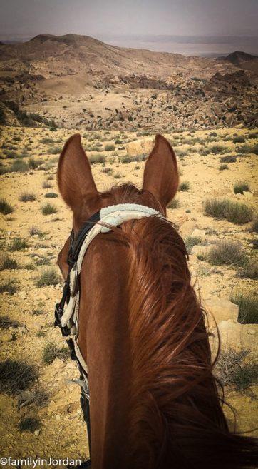 cheval sego