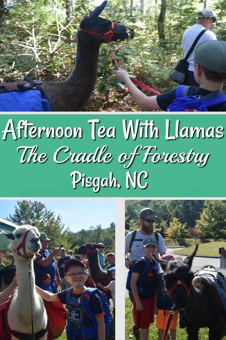 Tea with Llamas