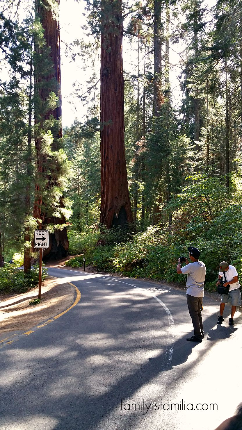 Road Trips are for Making Amazing Family Memories: Sequoia National Park