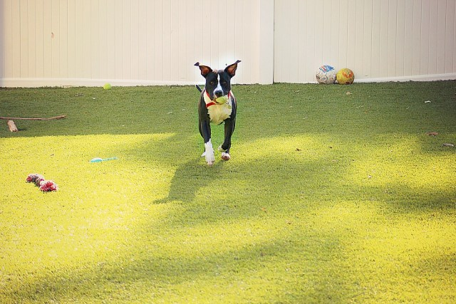 Dog bark ball