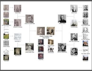 treeseek picture pedigree