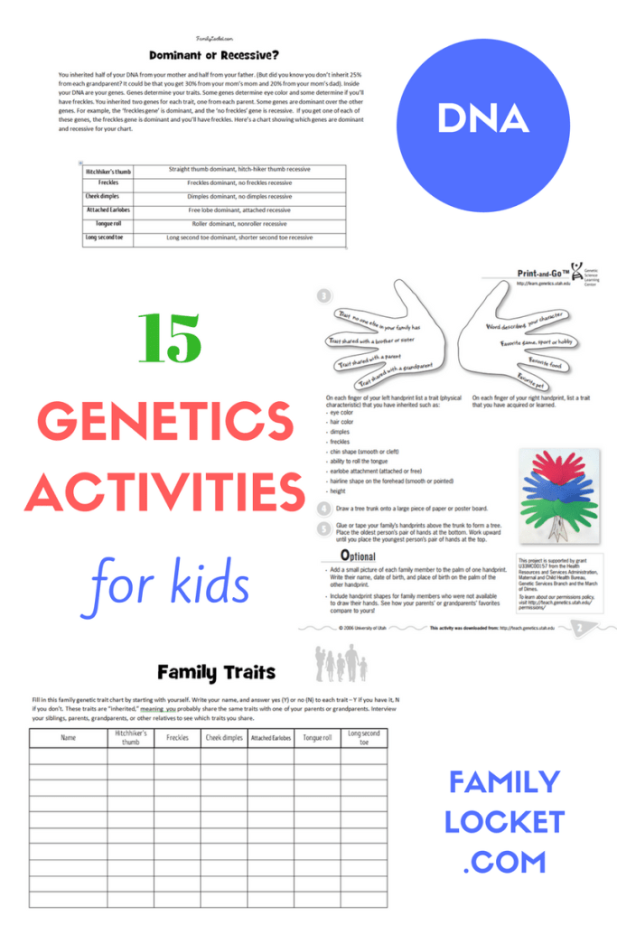 15 Genetics Activities for Kids Family Locket – Genetics Basics Worksheet
