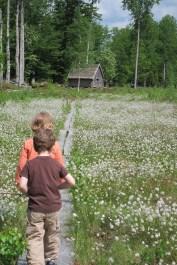 K and friend traversing plank bridge across a field of wildflowers at Rashult