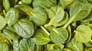 nutritious spinach