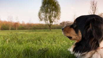 eb37b1072cf3053ed1584d05fb1d4390e277e2c818b4124491f4c979afe5 640 - Tips And Tricks On How To Train Your Dog Correctly