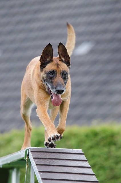 ee31b90d2cf11c22d2524518b7494097e377ffd41cb2154592f1c97da4 640 - Tips And Advice On How To Train Your Dog