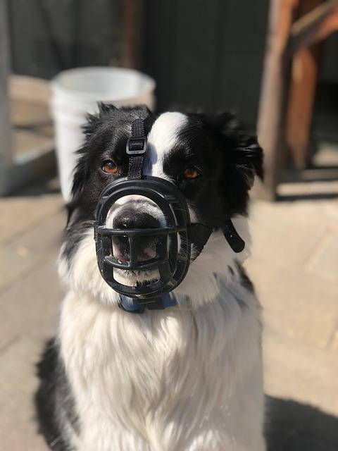 ea33b60c29f2073ed1584d05fb1d4390e277e2c818b412469df3c770a0ea 640 - Surprise Your Dog With These Dog Training Tips!