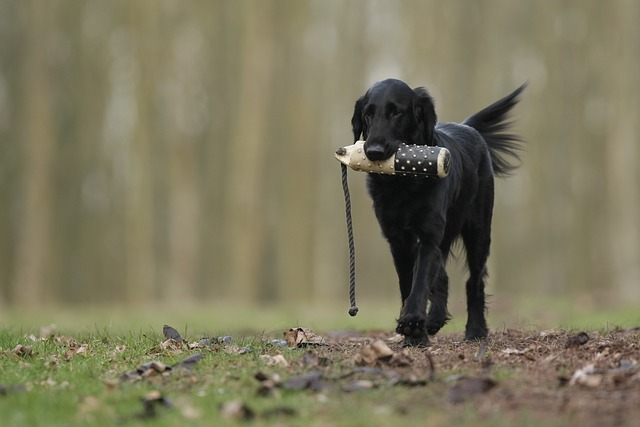 ea37b7082cf3083ed1584d05fb1d4390e277e2c818b4154290f4c579a3ee 640 - How To Achieve Amazing Results From Your Puppy Training Program