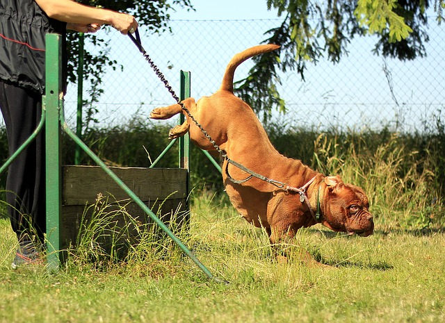e830b0082cf1093ed1584d05fb1d4390e277e2c818b414419df0c870a0ec 640 - You Can Easily Train Your Dog If You Follow These Tips